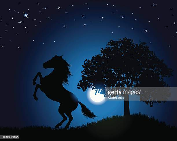 wild stallion background - horse under the moonlight - paddock stock illustrations, clip art, cartoons, & icons
