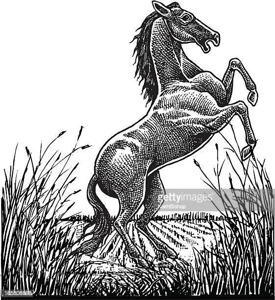 Wild Stallion in Field