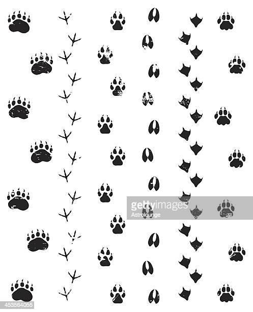 ilustraciones, imágenes clip art, dibujos animados e iconos de stock de wild pasos - fauna silvestre