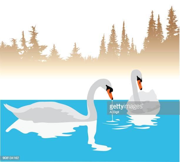 Wild Swans Bathe