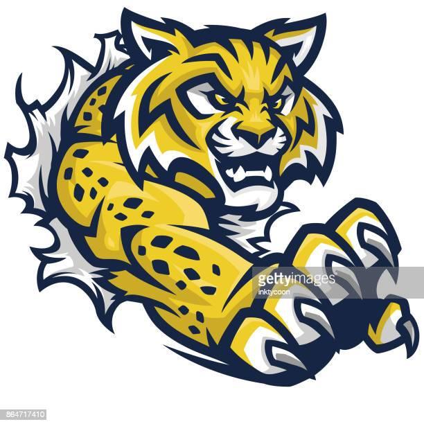 ilustrações, clipart, desenhos animados e ícones de wildcat kit esportivo de lágrima - fighting stance