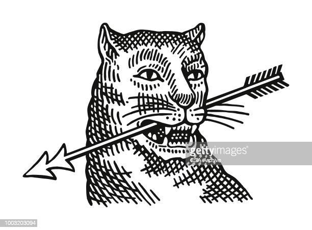 wildcat with an arrow in its mouth - aggression stock illustrations