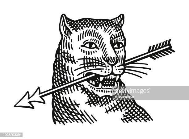 ilustraciones, imágenes clip art, dibujos animados e iconos de stock de gato montés con una flecha en su boca - puma