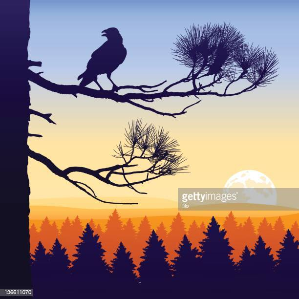 wilderness twilight - ponderosa pine tree stock illustrations, clip art, cartoons, & icons