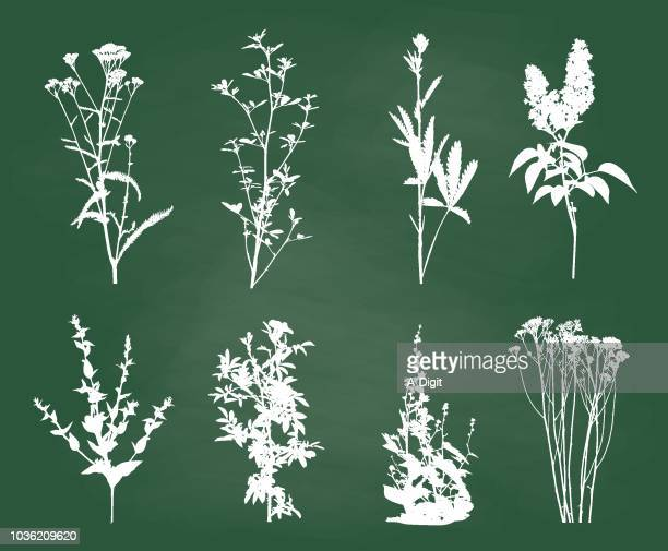 wildflowers and weeds chalk sketch - wildflower stock illustrations, clip art, cartoons, & icons
