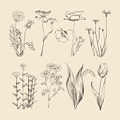 Wildflowers, herbs and flowers. Spring or summer botanical vector collection
