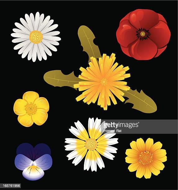 ilustraciones, imágenes clip art, dibujos animados e iconos de stock de flores silvestres - planta de manzanilla