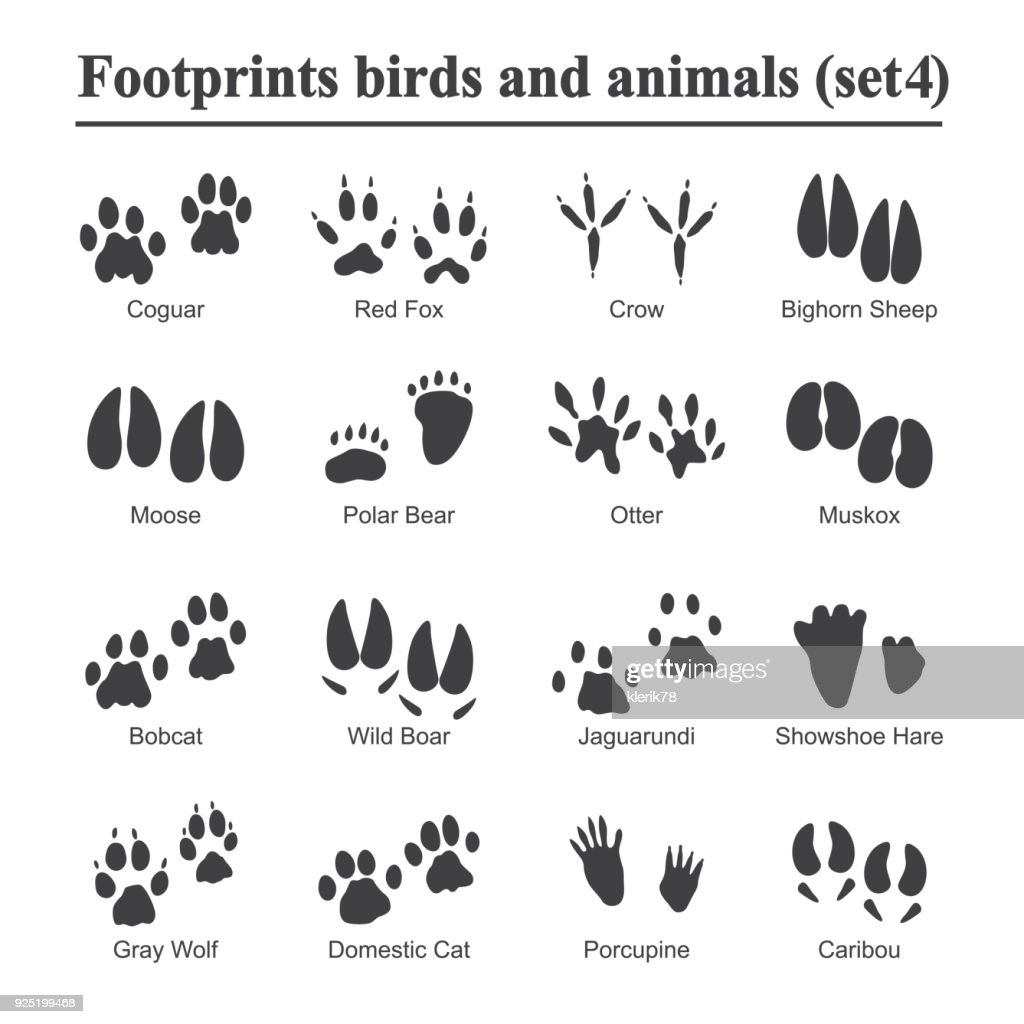 Wildlife animals and birds footprint, animal paw prints vector set. Footprints of variety of animals, illustration of black silhouette footprints