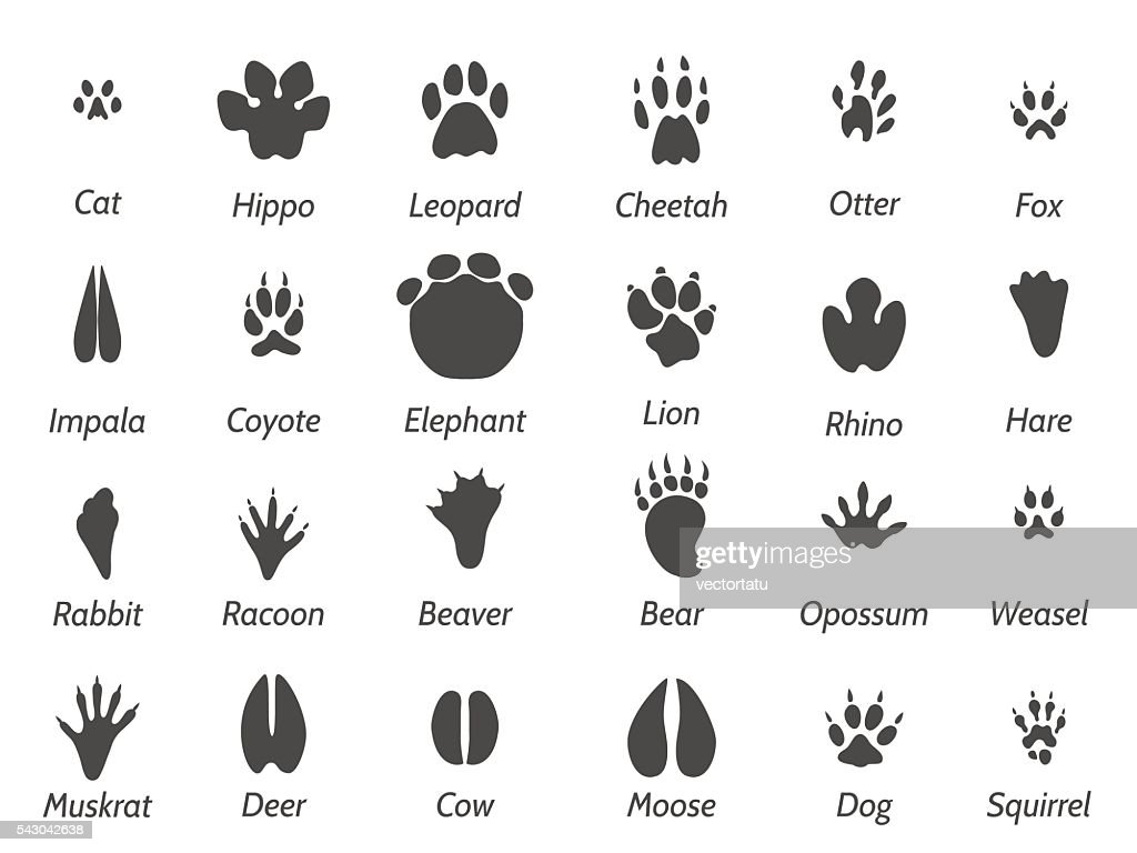 Wildlife animals footprints