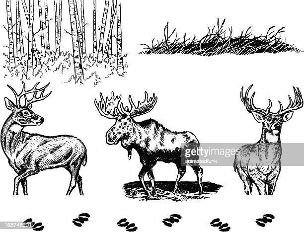 wildlife elements - elk stock illustrations