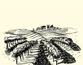 Wine & Grape illustration.