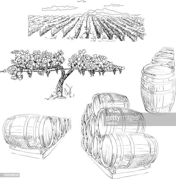 winery - vine stock illustrations