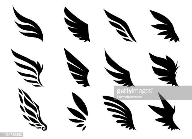 wing collection - animal wing stock illustrations