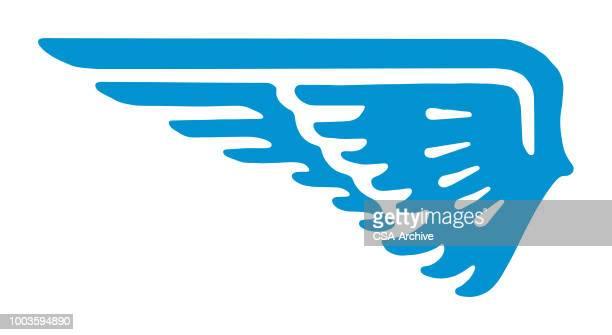 ilustrações, clipart, desenhos animados e ícones de wing  - asa animal