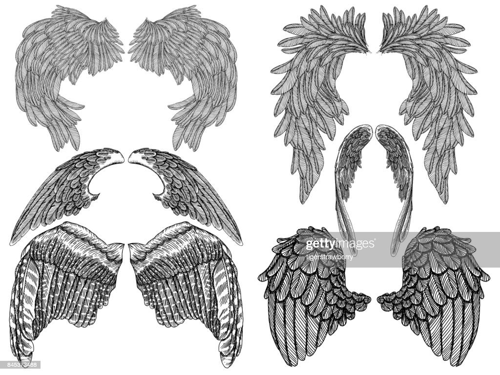 Wings pair set. Hand drawn detailed bird and angel wings. Vector.