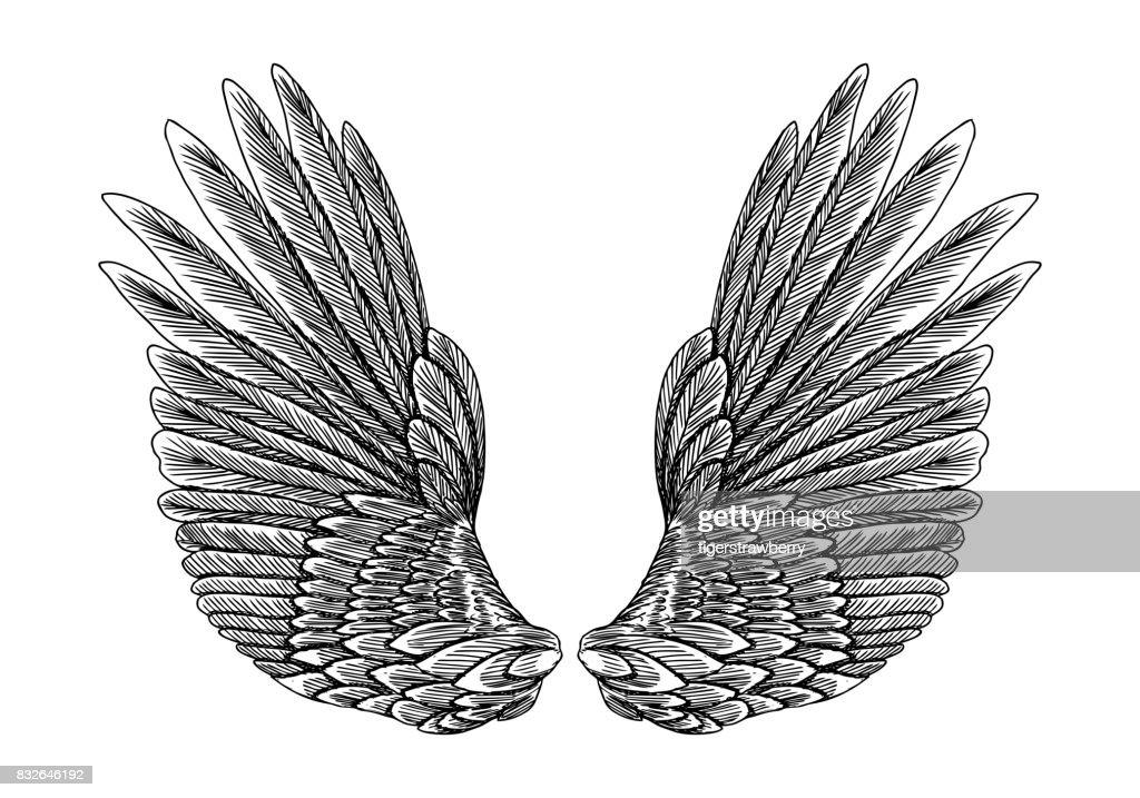 Wings pair set. Hand drawn detailed bird wings. Card, poster, t-shirt, smart phone, CD print design. Vector.