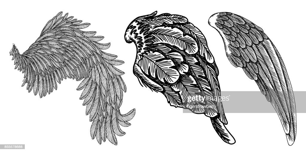 Wings set. Hand drawn detailed bird wings collection. Vector.
