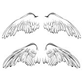 Wings sketch collection cartoon vector illustration