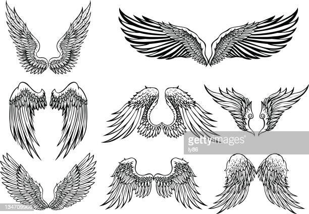 wings - animal wing stock illustrations