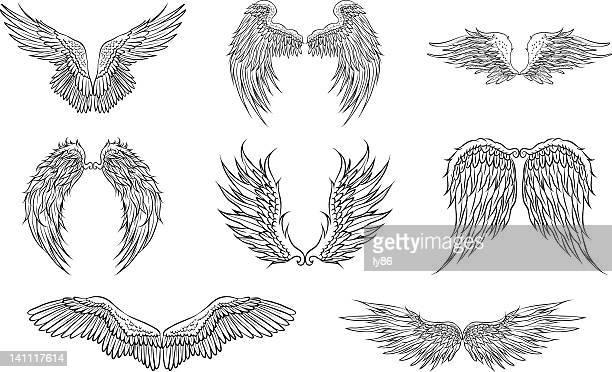 ilustrações, clipart, desenhos animados e ícones de asas de frango - asa animal
