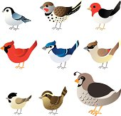 Winter birds commonly found in North America