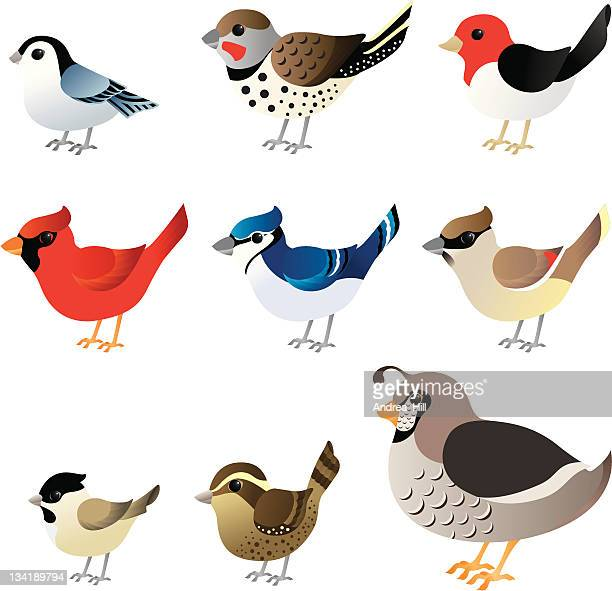 winter birds commonly found in north america - quail bird stock illustrations, clip art, cartoons, & icons