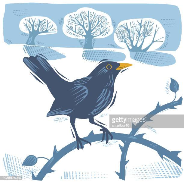 winter countryside scene with blackbird - songbird stock illustrations