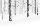 Winter deciduous forest