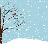 Winter Landscape Scene. Christmas New Year Greeting Card. Forest Falling Snow Red Capped Robin Bird Sitting on Tree. Blue Sky Copy Space