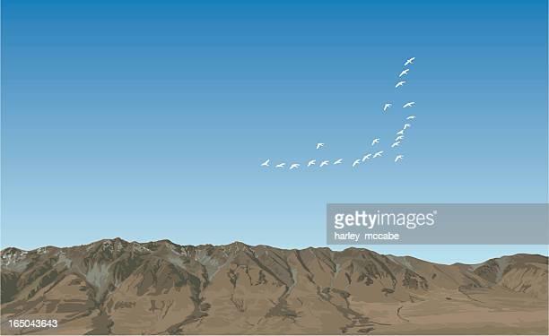 ilustraciones, imágenes clip art, dibujos animados e iconos de stock de migración de invierno - alpes neozelandeses