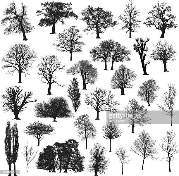 winter tree silhouette collection - plain background stock illustrations