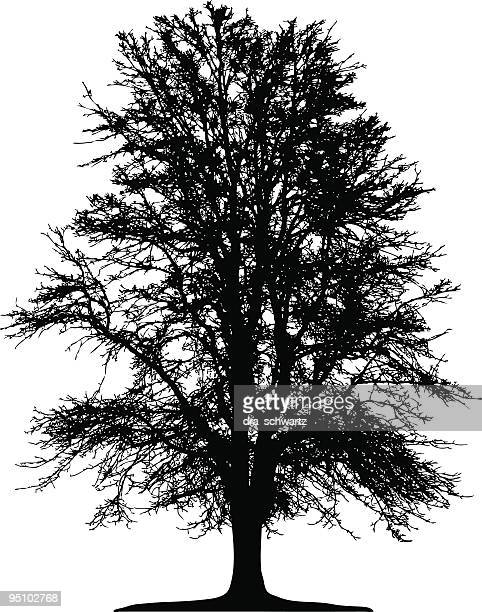 Winter Tree silhouette, vector