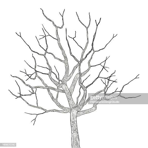 winter tree - bare tree stock illustrations