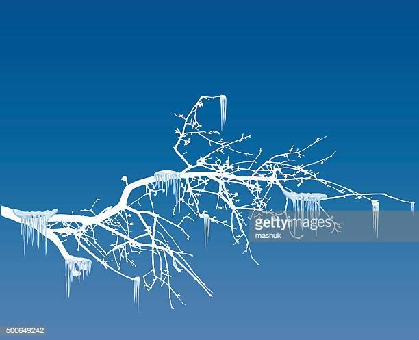 冬の木 icicles