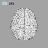 Wireframe brain illustration in top view on gray BG