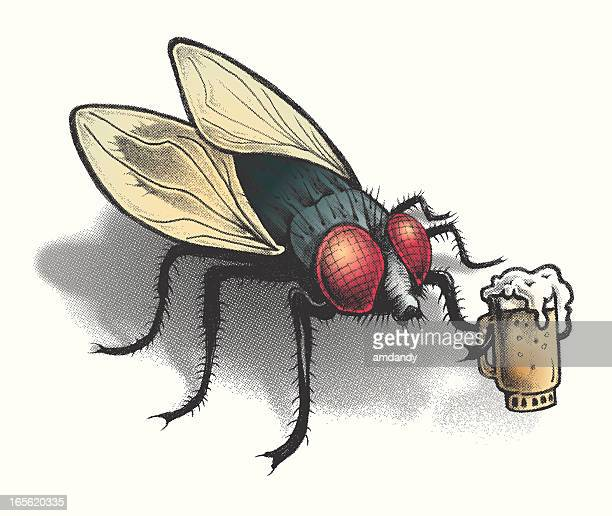 bar fly with a frothy cold beer - fly insect stock illustrations