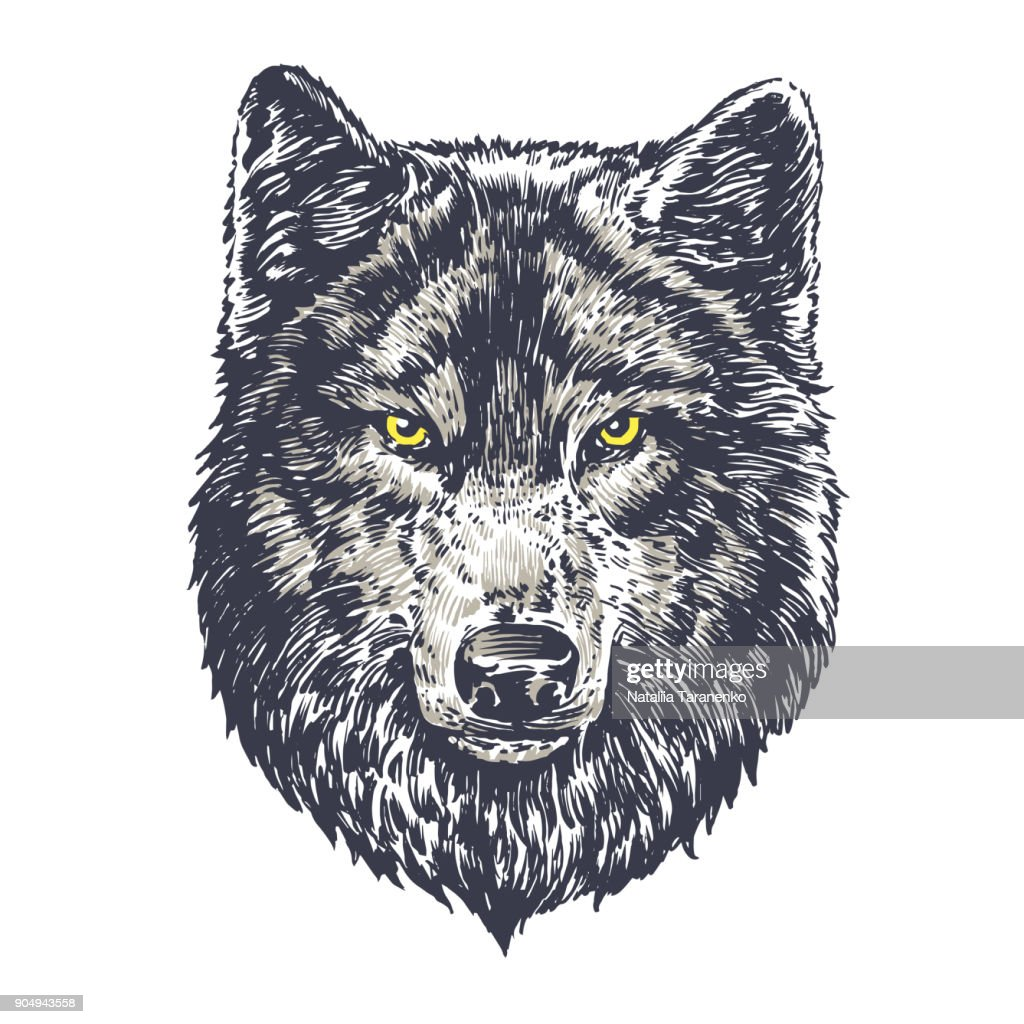 Wolf dark on white background