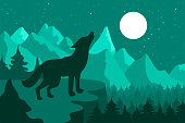 Wolf in the night coniferous forest