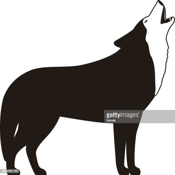 wolf standing and roaring, flat vector illustration - howling stock illustrations, clip art, cartoons, & icons