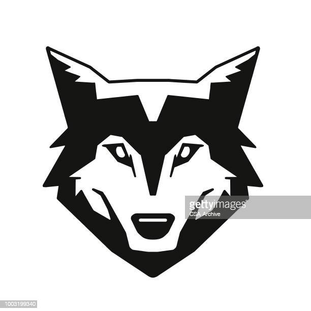 wolf - one animal stock illustrations