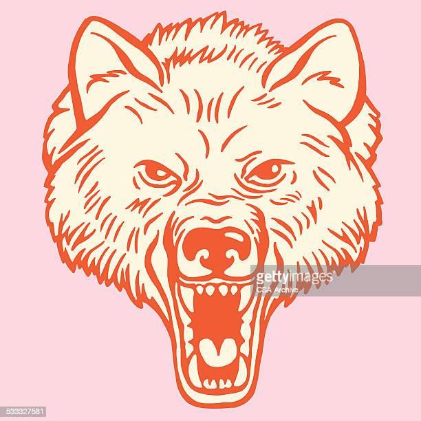 wolf - one animal stock illustrations