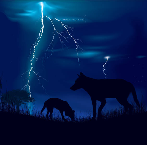 wolfs on a storm - dog thunderstorm stock illustrations