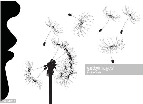illustrations, cliparts, dessins animés et icônes de femme souffle pissenlit - fleur de pissenlit