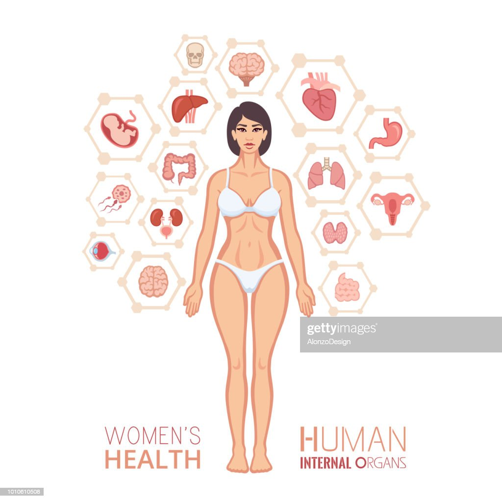 Woman Body And Internal Organs Vector Art Getty Images