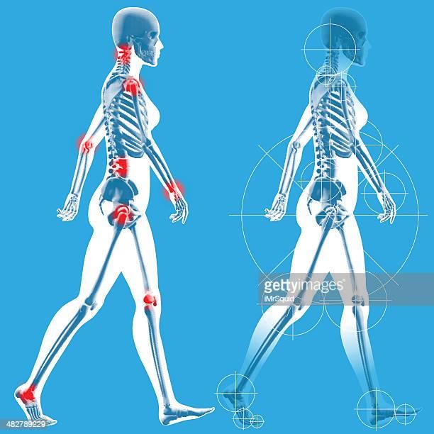 ilustraciones, imágenes clip art, dibujos animados e iconos de stock de mujer de informal a lado perfil - esqueleto humano