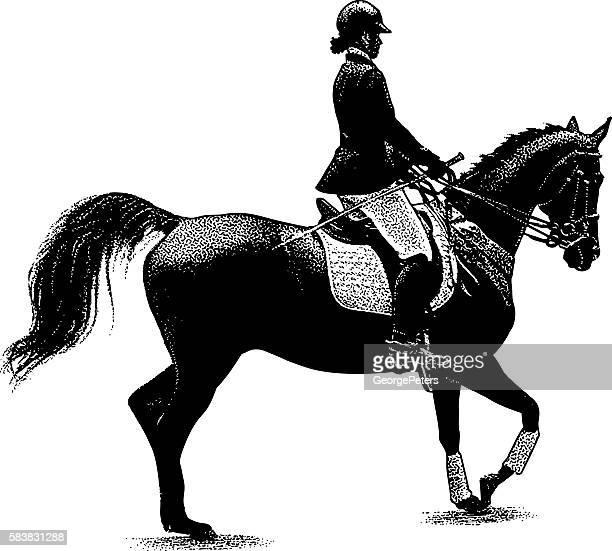 ilustraciones, imágenes clip art, dibujos animados e iconos de stock de woman horseback riding equestrian style - caballo familia del caballo