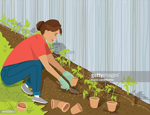 woman planting tomatoes in her garden - landscaper stock illustrations, clip art, cartoons, & icons
