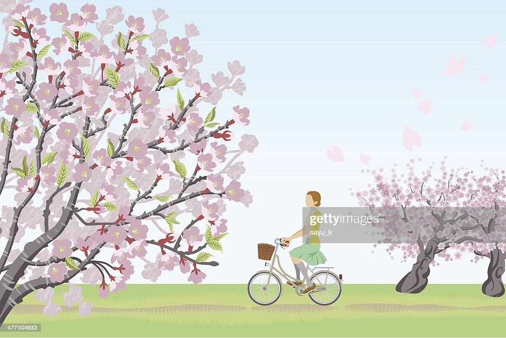 Woman riding bicycle in cherry blossom trees