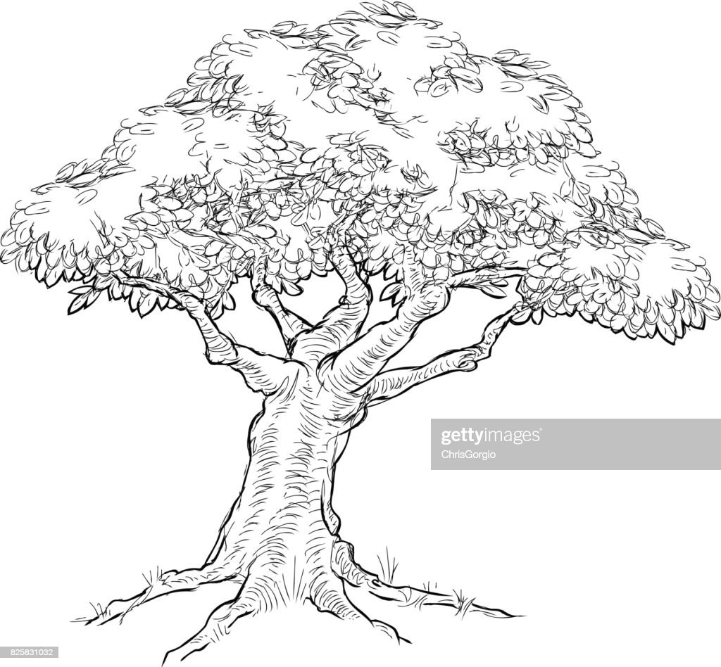 Woodcut sketch Style Tree