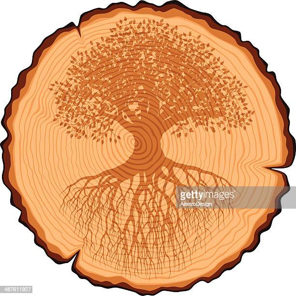 Wooden Cross Section and Old Tree with Roots